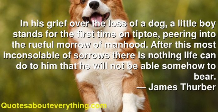 In his grief over the loss of a dog, a little boy stands for the first time on tiptoe, peering into the rueful morrow of manhood. After this most inconsolable of sorrows there is nothing life can do to him that he will not be able somehow to bear.      ― James Thurber